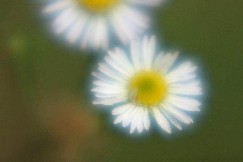 マクロ 花