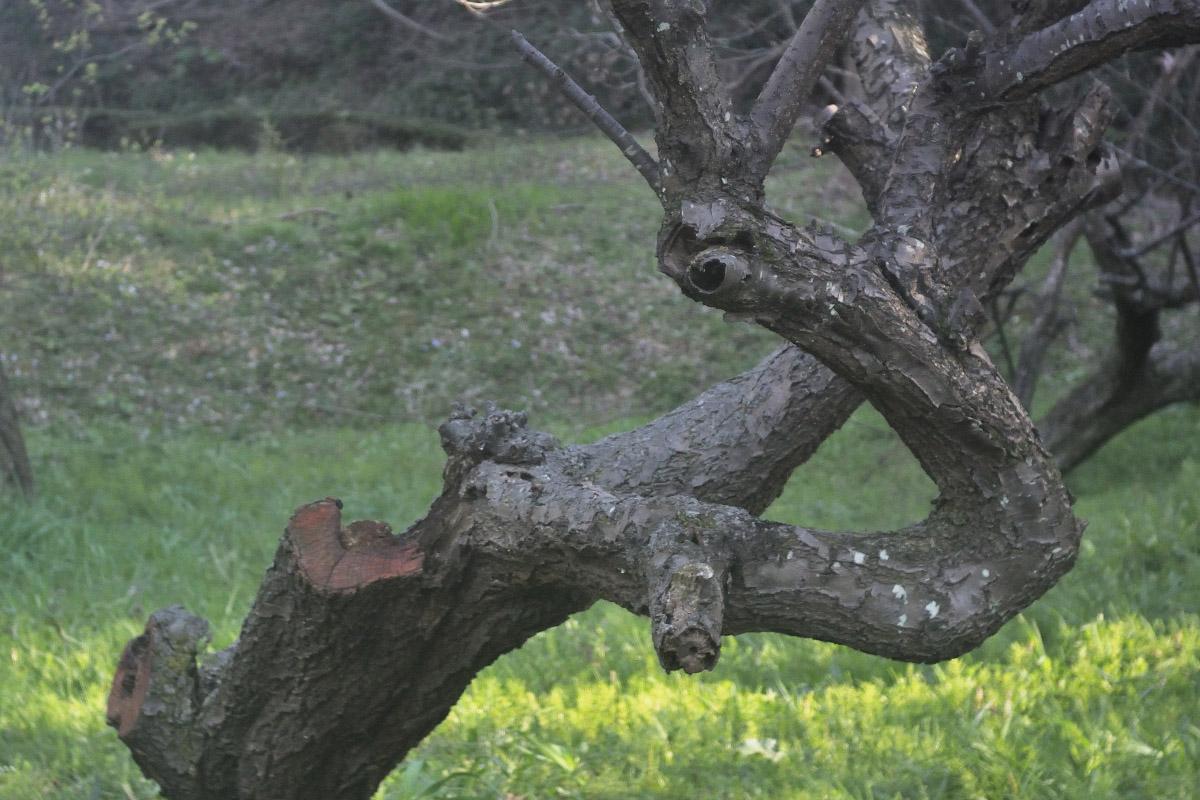 ワイドE 木