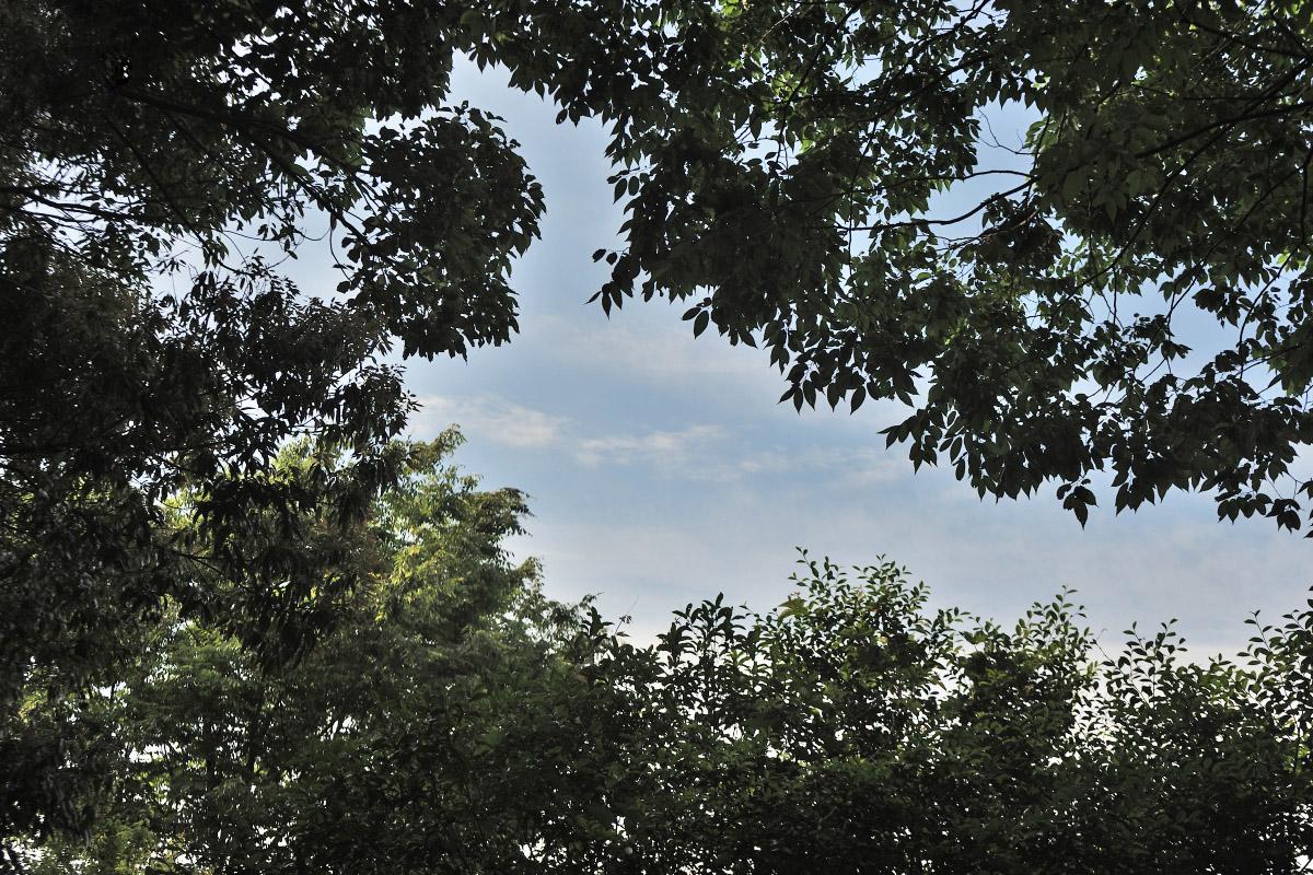 森から覗く青空