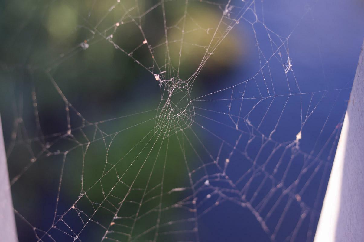 蜘蛛の巣07A