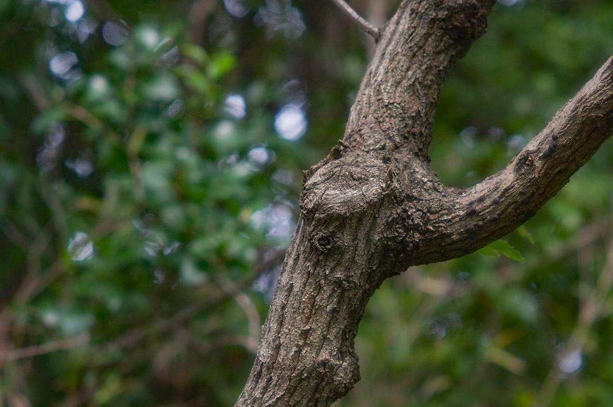 ヤシカ135森の木