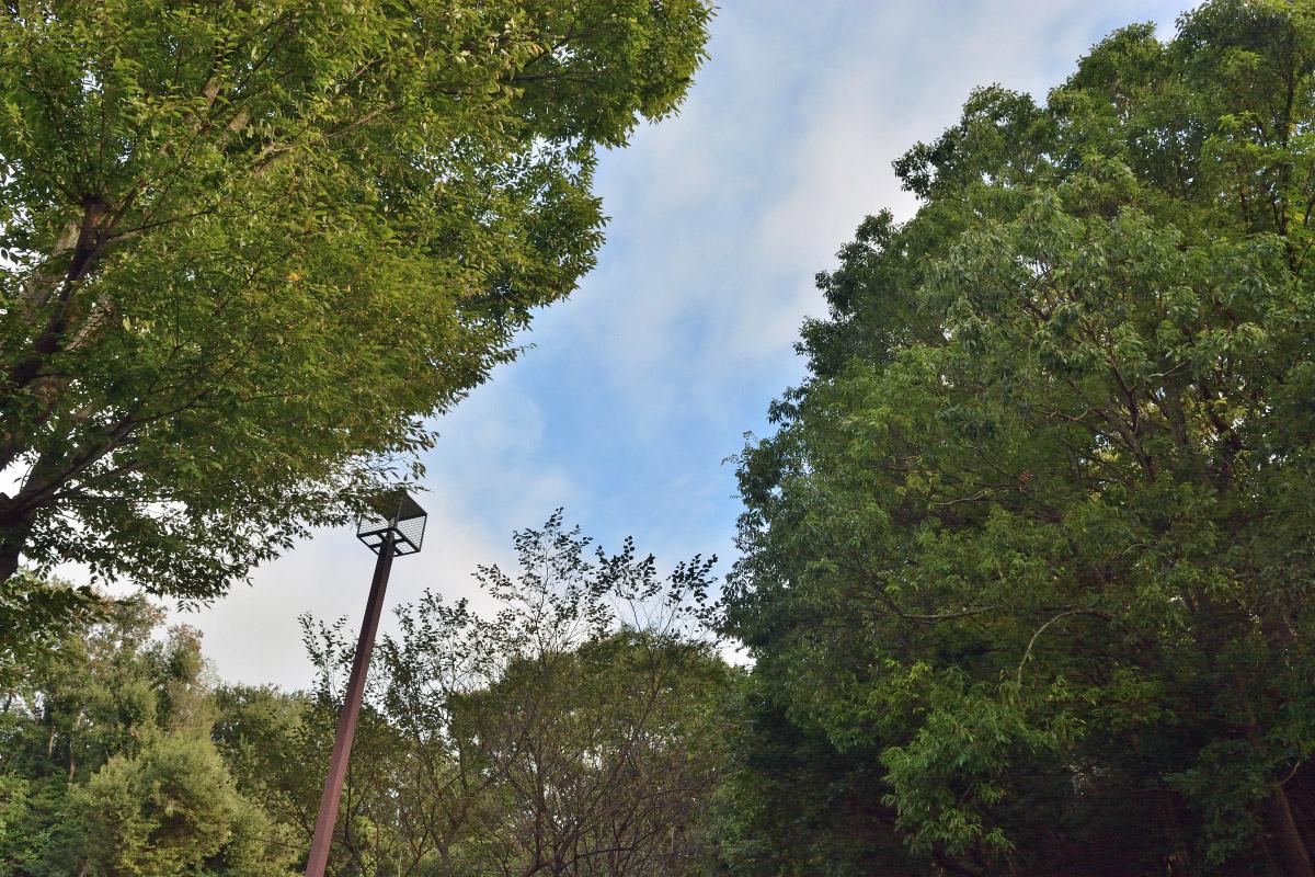 afs18-55公園の木々