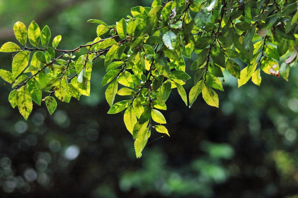 zuiko100-200木の葉