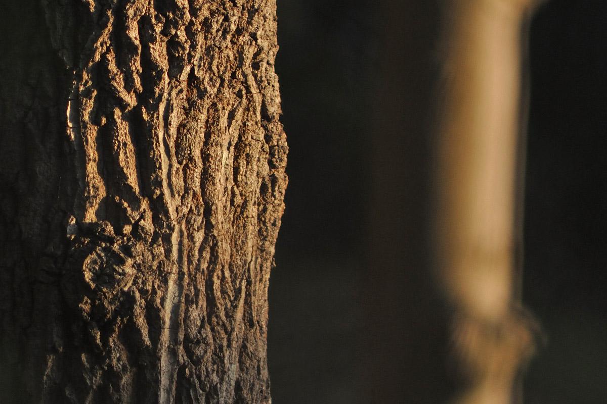 ROKKOR200mmF3.5作例木