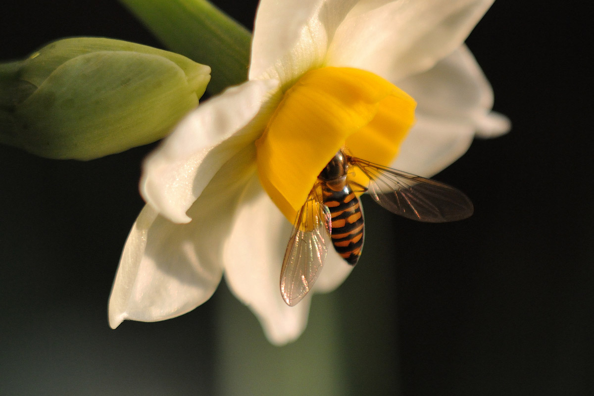 NEW FD 100mm F4 MACRO作例 花と昆虫