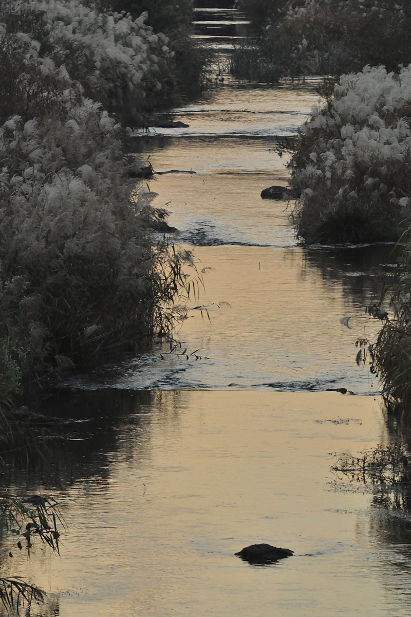 MINOLTA ROKKOR-TC 135mm F4 夕日に染まる川