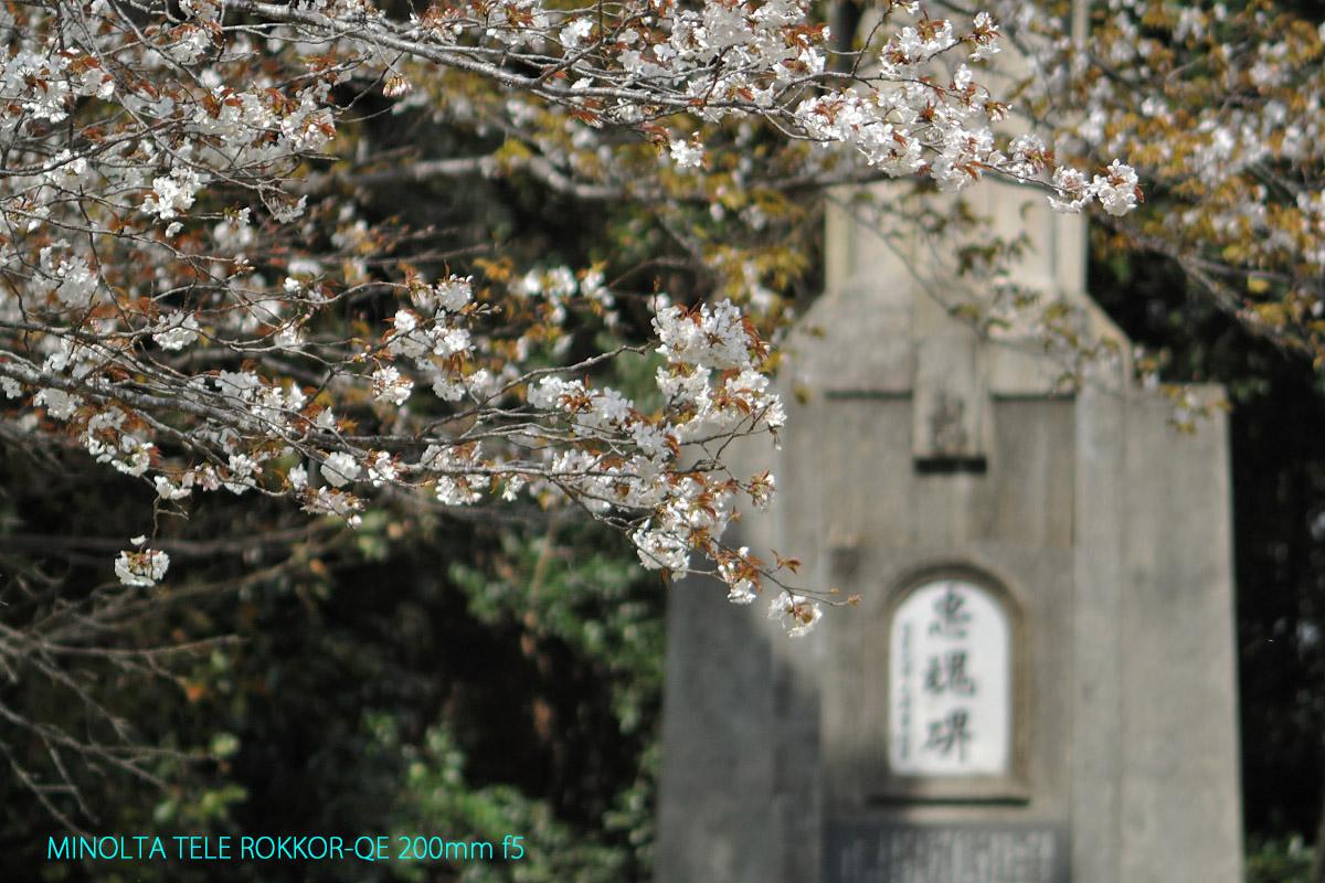 ROKKOR-QE 200mm f5作例桜と忠魂碑