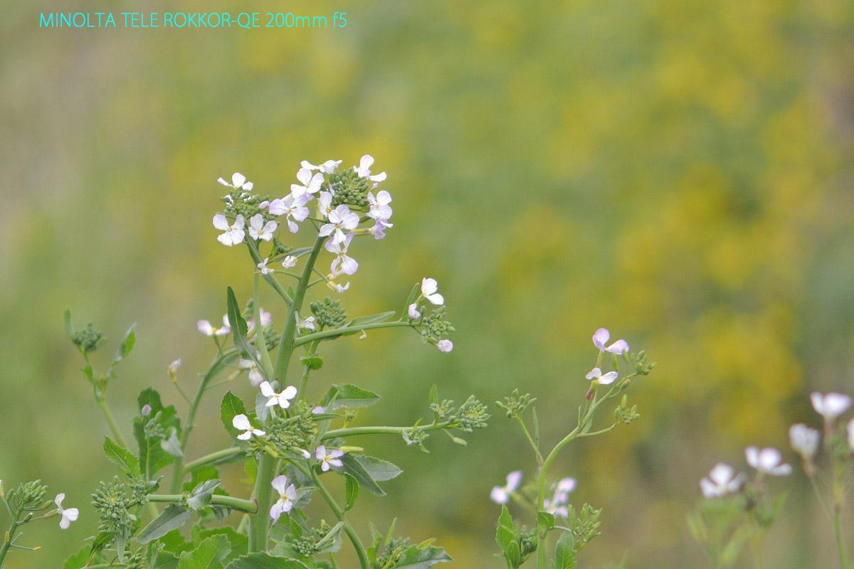 ROKKOR-QE 200mm f5作例野に咲く花