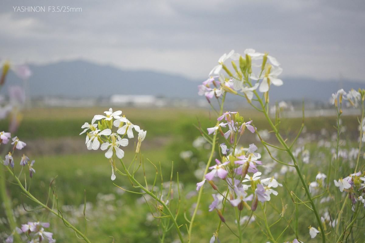 Y16景色と花
