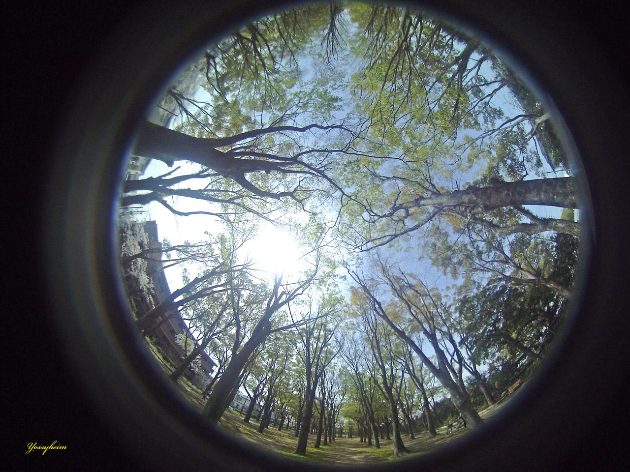 Entapano C-01作例 公園の木