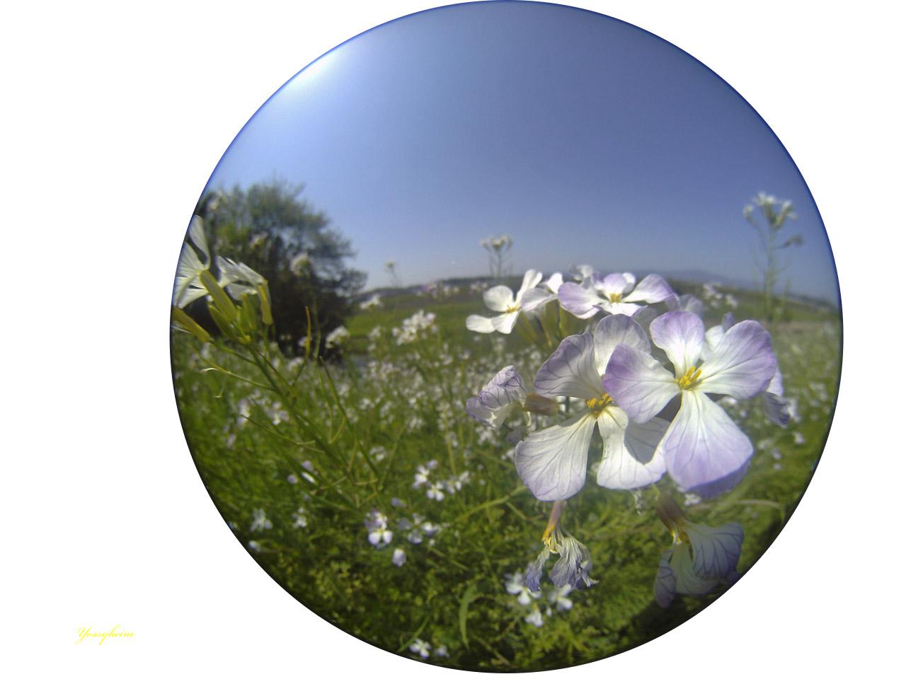 Entapano C-01作例 川辺の花