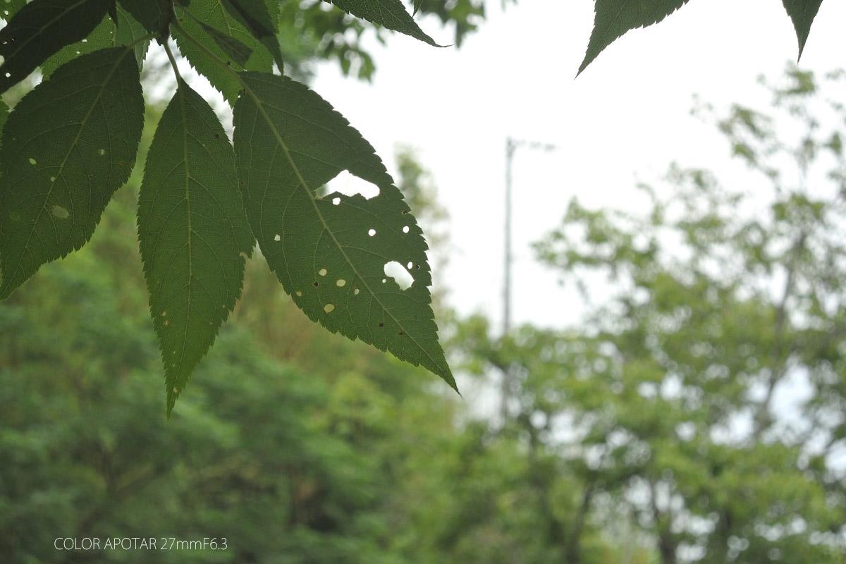 アグファ4000作例 木の葉