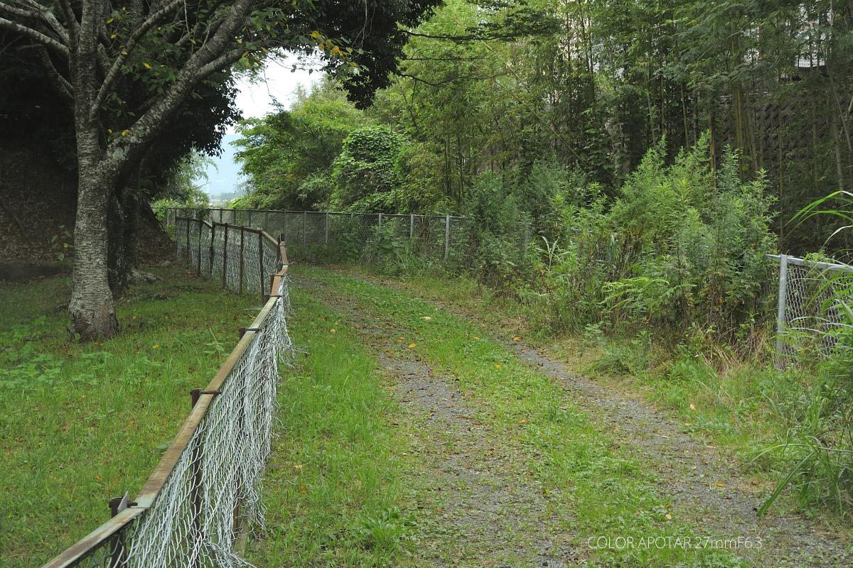 アグファ4000作例 森の道